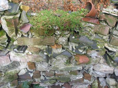 muurpeper op de muur