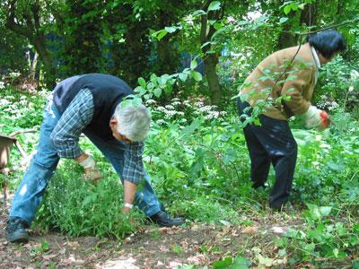 onkruid wieden in de Vergeten Tuin